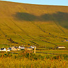 Hillside Fields of DIngle