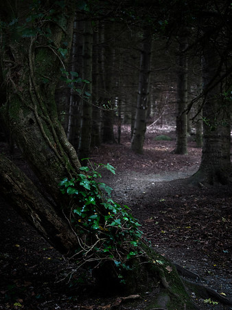 Forest Path.  Ireland, 2013.