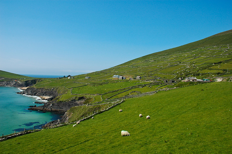 Rolling Fields of Dingle