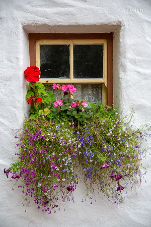 European Flower Box
