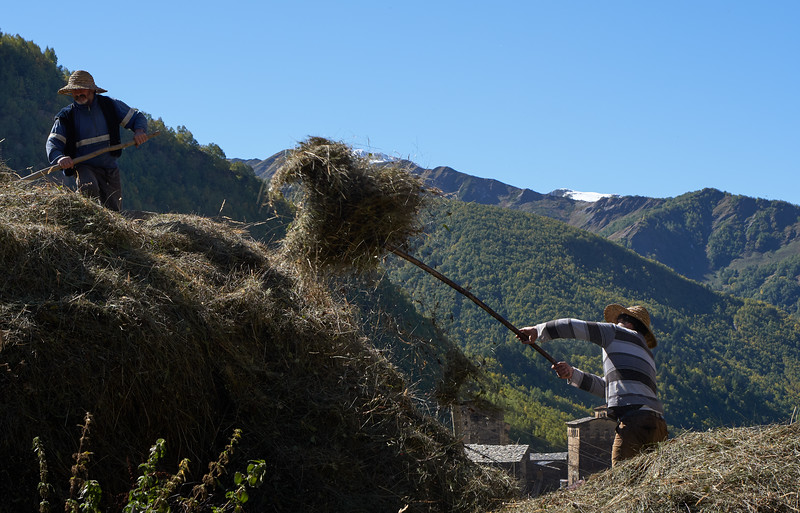 Working with hay