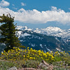 Alpine Spring Flowers