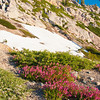 Pink Wildflowers on Squaw Valley