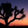 Sunrise in Joshua Tree National Park
