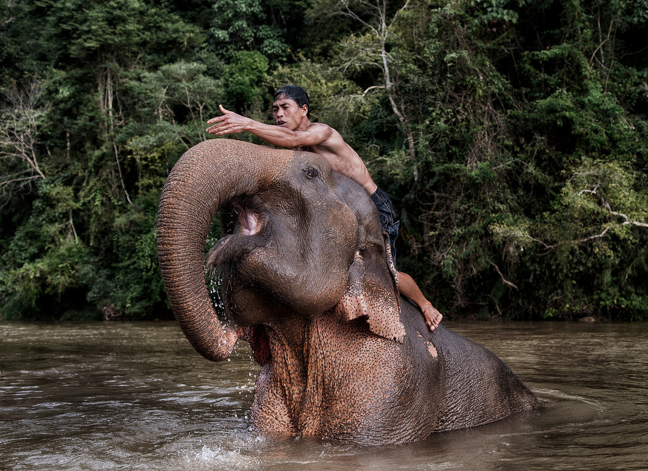 Mahut washing his elephant in the river, outside the village of Bann Ann.<br /> <br /> Laos, 2010.