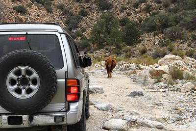 Montero encounters the trail boss