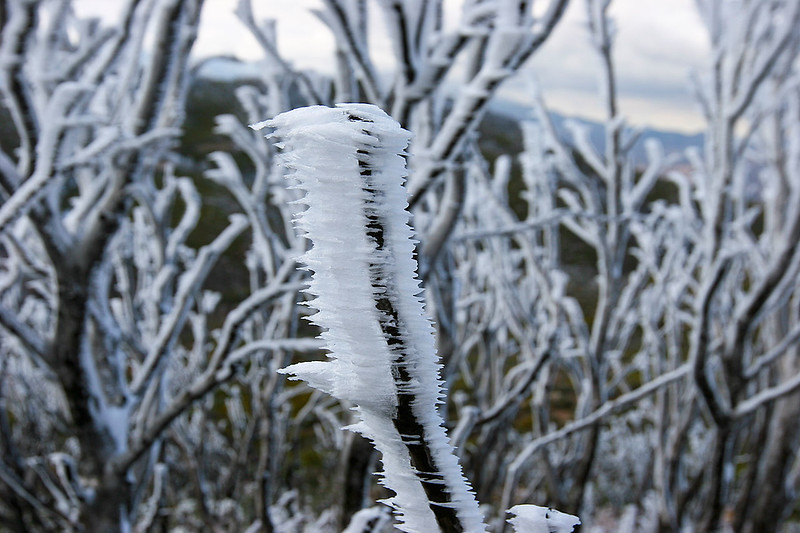 The wind blown rain and snow had a fascinating effect on these trees.