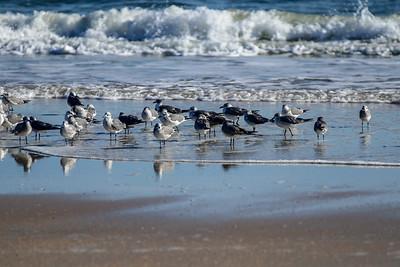 Beach At Marineland, Florida