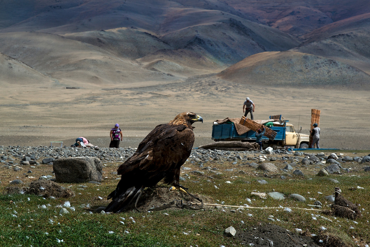 The precious eagle is the last thing that Mr Shamurat packs away for the long migration to lower grounds.