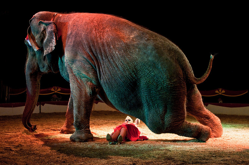 "Danger is part of the show. One minute Esmeralda is risking her life under an elephant, the next she is in the caravan cooking dinner for the family. <br /> <br /> Esmeralda comes from a long tradition of circus artists.  When asked if she is afraid  under the elephant, she answers ""No, Mara and i go back a long way,  if she wanted to squash me she would have done it a long time ago""."