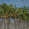 Green palm trees and a blue sky stand over a rustic reed fence in the Mexican Yucatan