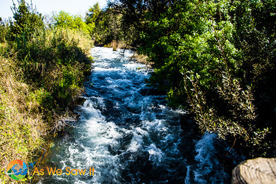 Raging river from a spring at Tel Dan.  Water is the essence is settlement world wide and no different here at Dan