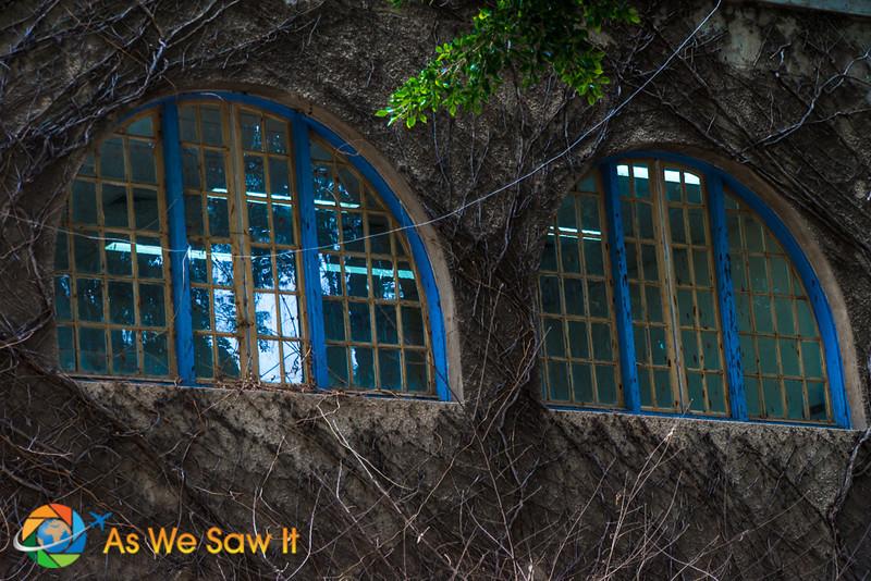 Vine covered wall along Balfur