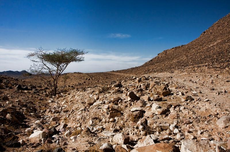 The rocky desert