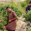Boys harvesting the roses