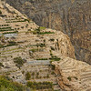 Jebel Akhdar rose terraces