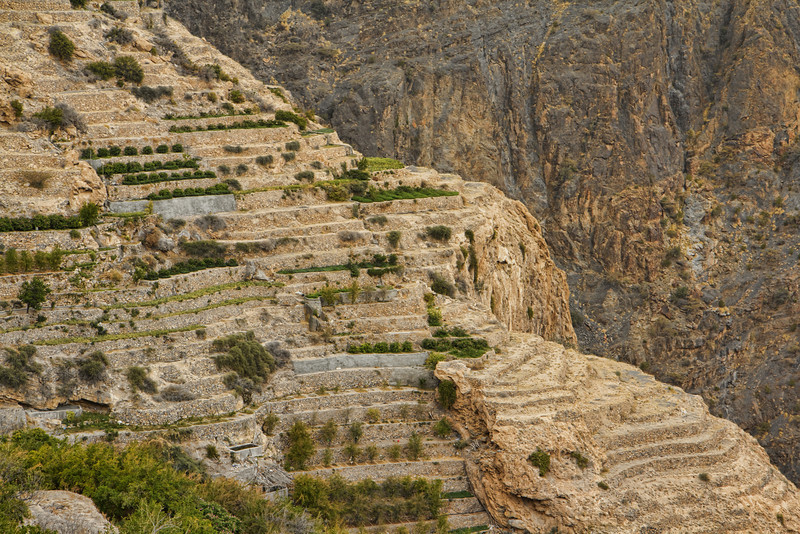 Jebel Akhdar rose terraces