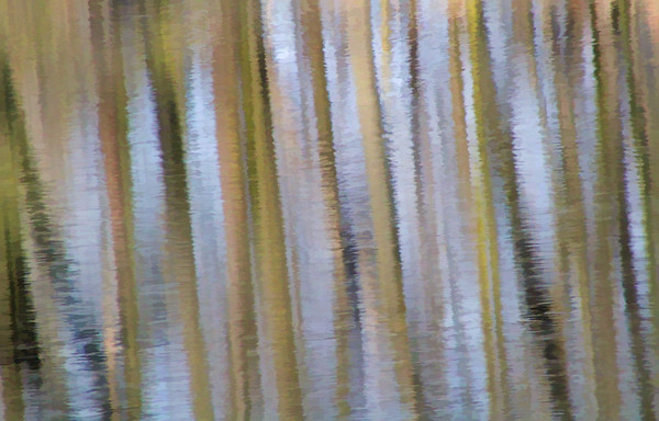 Woods in Water, Shoreview, Minnesota - #0688