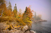 Peak fall colors on foggy shoreline at Lutsen, Mn., #0478