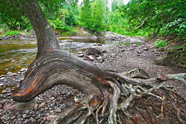 Tree trunk on the Temperance River, Minnesota, #0060
