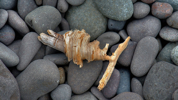 Driftwood corkscrew at Lake Superior, Light House Beach, #0052