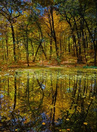 Forest pond at the Minnesota Landscape Arboretum, Chaska, Mn., #1821