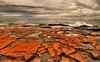 Lake Superior lava with algae on the North Shore, Artists' Point, Grand Marais, Mn. #0169
