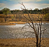 Early spring at the pond in the Arden Hills National Guard Wildlife Refuge, #0329