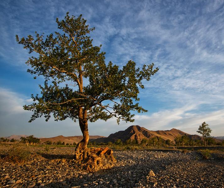 Landscape of western Mongolia, 2015.