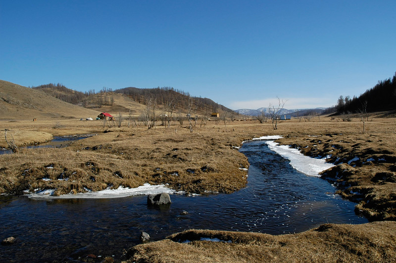 Streams of melted ice flow through the forest. Central Mongolia