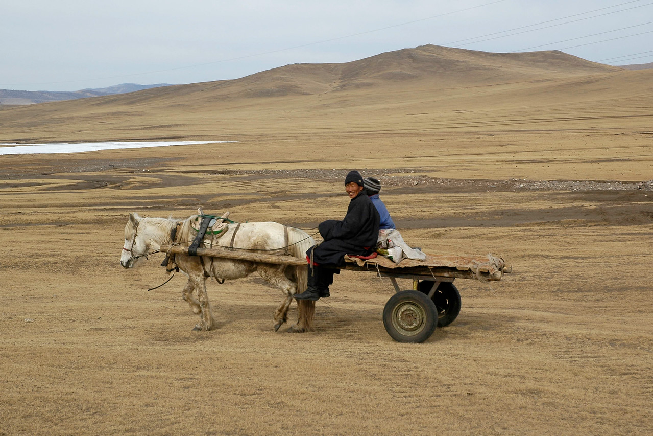 A common mode of transportation in rural Mongolia. Cattle (horse) drawn carts move across the plains at a slow and steady pace. Central Mongolia.
