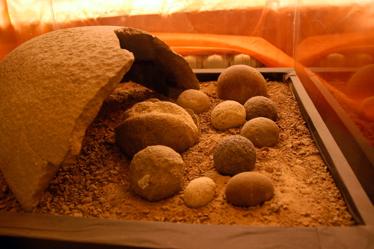 Fossils of Dinosaur eggs and bones found in Gobi Desert, Mongolia.