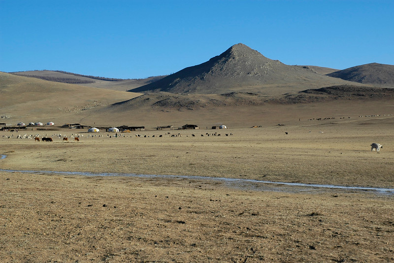 Cattle grazing in the distance. Vast expanse of land with freezing temperatures and frozen pond/puddles. Gobi desert. Rural Central Mongolia.