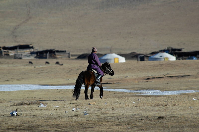 Mongolian rider with his horse. Also seen is a cluster of gers in the back. Living at great distances, its good to see an occasional human in the vast expanse of land while we were drive across long distances. Gobi desert. Rural Central Mongolia.