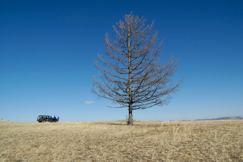 """Our car in which we did the full trip in front of the """"Lone tree"""" which looked a bit lonely. It was standing erect with no friends or family. Stopped to get a picture. Central Mongolia."""