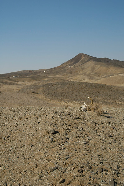 The Gobi desert,Mongolia can be a rather harsh environtment and it can take its tool.