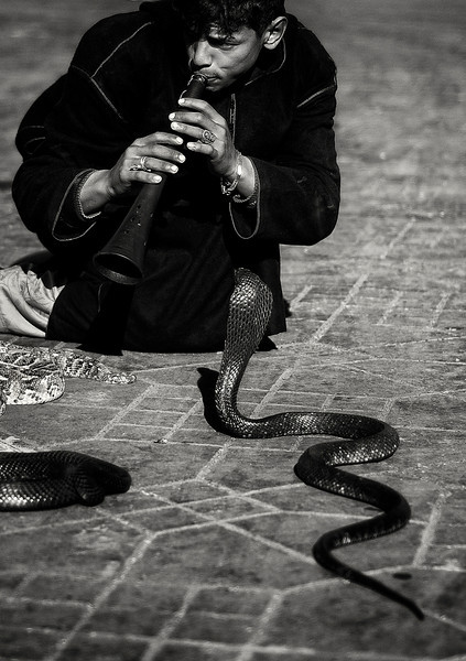Snake charmers in the Djemaa El Fna share the predatory instincts of the snakes they keep. Hustling with them for a picture is not for the initiated. A once upon a time traditional and magical art has now been transformed into the biggest tourist trap in Marrakesh, <br /> <br /> Morocco, 2010.