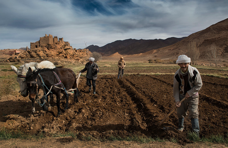 Men working in the fields with an old abandoned ksar in the background.<br /> <br /> Tamtetoucht, Morocco, 2018.