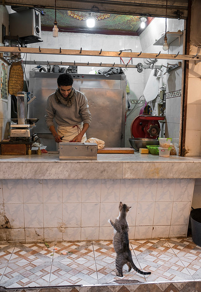 A cat begging for food from a butcher in the old medina.<br /> <br /> Fez, Morocco, 2018.