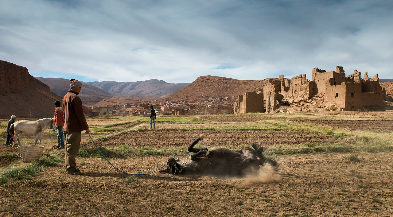 A man lets his horse enjoy a roll around on the ground after a hard days work.<br /> <br /> Tamtetoucht, Morocco, 2018.