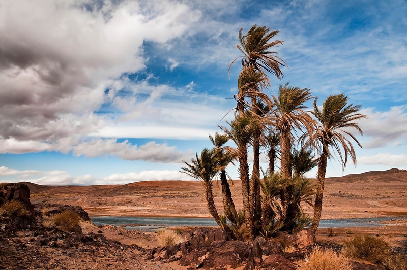 Oasis in the Draa Valley. <br /> <br /> South of Agdz, Morocco, 2010.