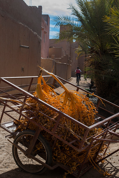 A trolley full of dates in side the Skoura  palmeraie.<br /> <br /> Skoura, Morocco, 2018
