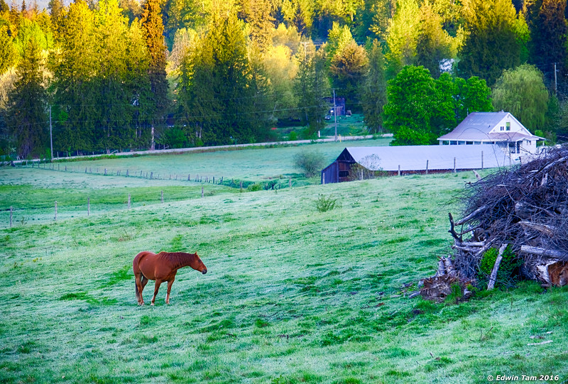 Early breakfast grazing by Brouse Loop.