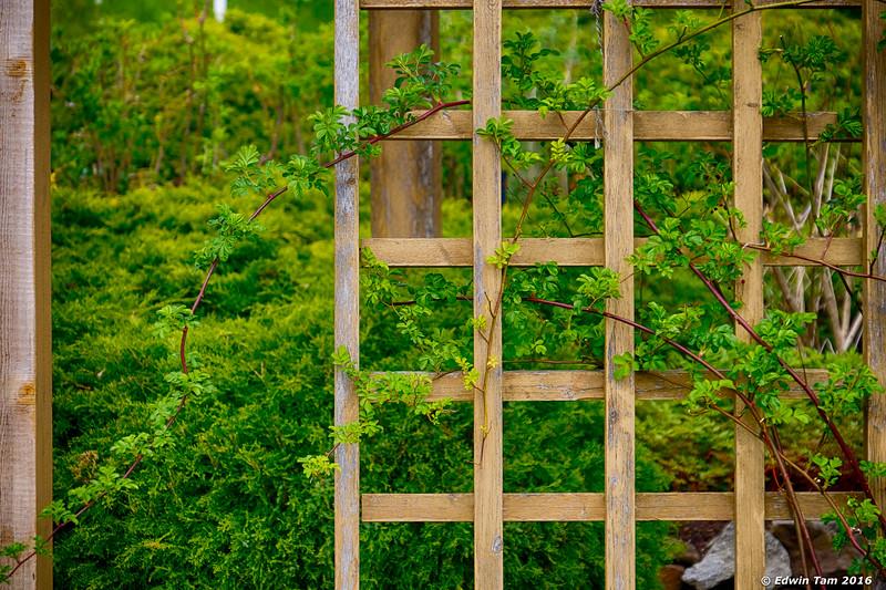 Trellis vines at Spicers Gardens.