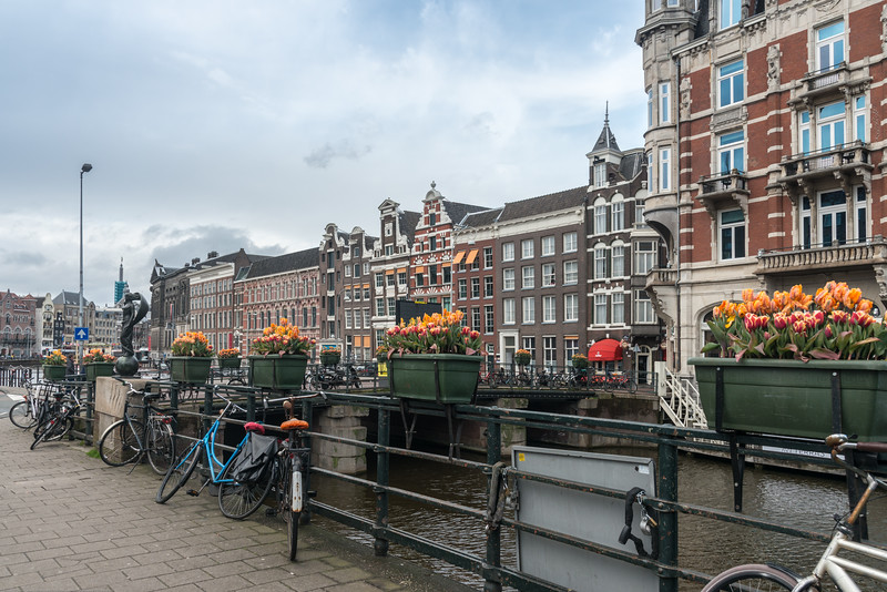 Cycles parked near the tulips n the streets at Amsterdam, Netherlands, Europe.