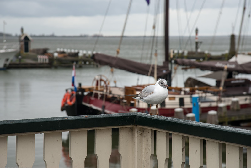 Perched and watching the boats at the water front at Volendam, Netherlands near Amsterdam.