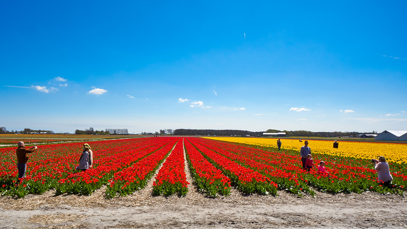 Colorful landscape in The Netherlands