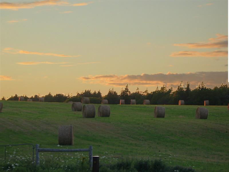 Cavendish farmlands, PEI