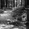 This trail was calling my name. Aug 2015, Tri-X and HP5 B&W film.