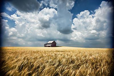 Barn in Golden Wheat